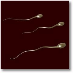 spermatozoizi.jpg