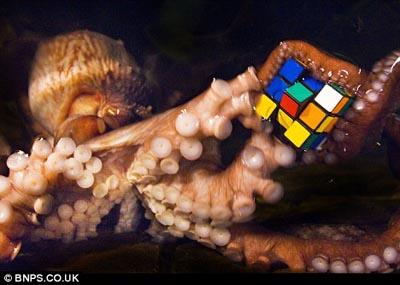 caracatita.jpg